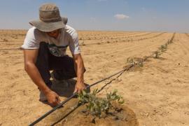 Đây là cách Israel khiến cả thế giới phải cúi đầu khi biến sa mạc thành nơi trồng rau, nuôi cá